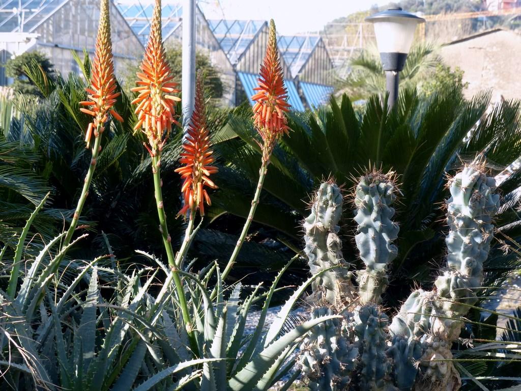 Il giardino dei giorgi lavagna coltivazione vendita - Piante grasse da esterno pendenti ...